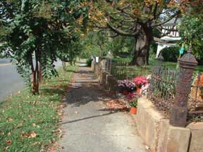 Bedford Avenue Sidewalk with Leaves and Petals