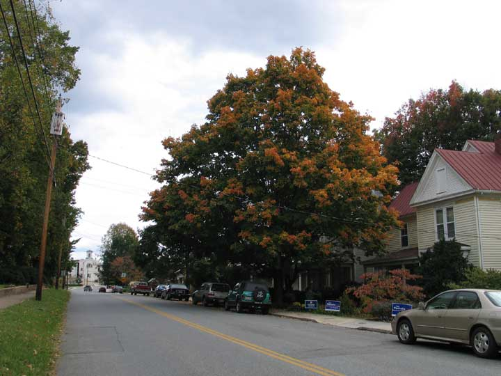 Bedford Avenue With Fall-Colored Tree