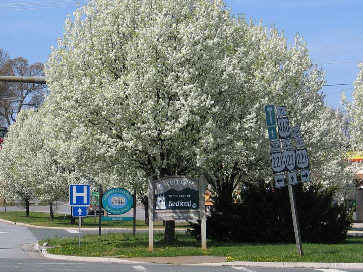 Pear Sign and Flowering Tree